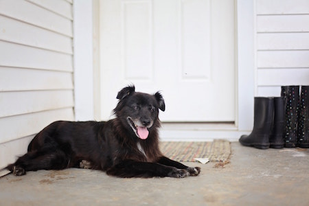 black-dog-front-porch-boots
